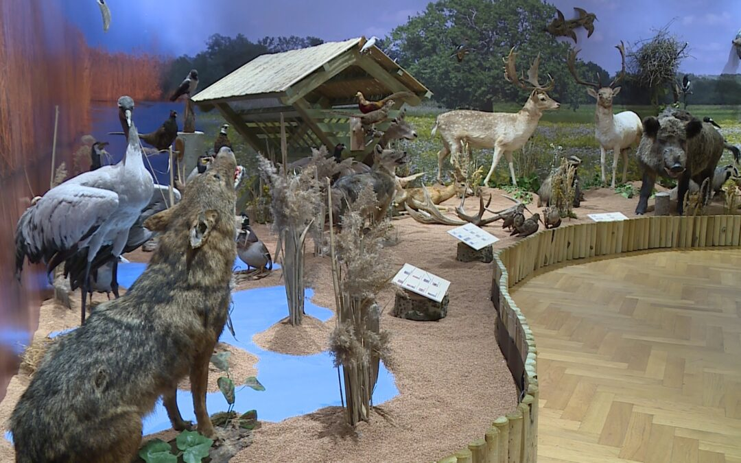 Vadászati kiállítás nyílt a  Munkácsy múzeumban